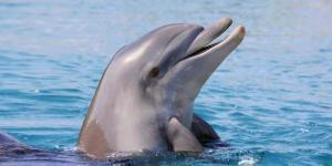 Delightful_Dolphin's avatar.