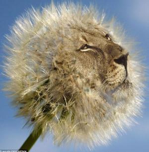 DandyLion's avatar.