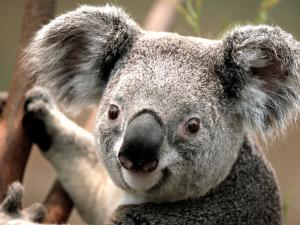 Rhinocrow's avatar.