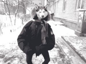 Anonwhale's avatar.