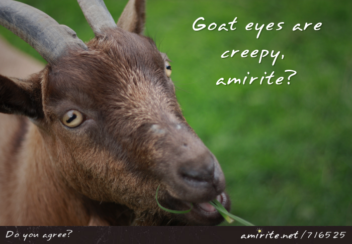Goat eyes are creepy, <strong>amirite?</strong>