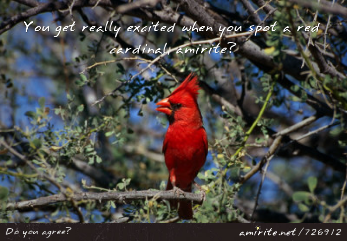 You get really excited when you spot a red cardinal, <strong>amirite?</strong>