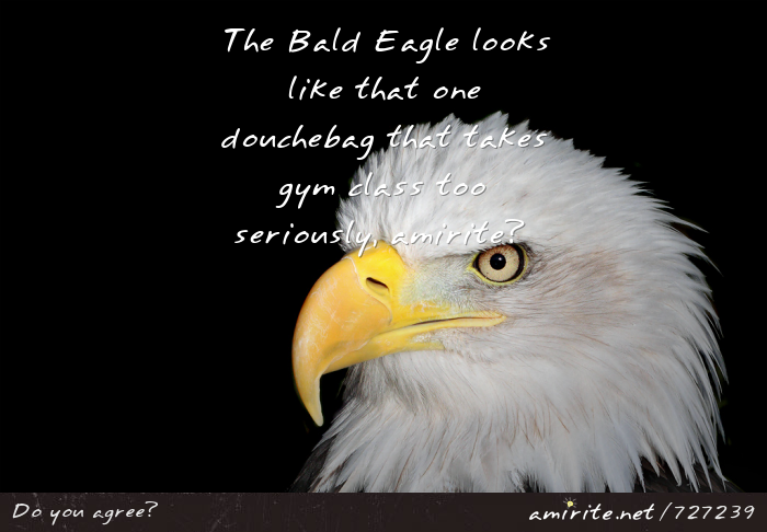 The Bald Eagle looks like that one douchebag that takes gym class to seriously, <strong>amirite?</strong>