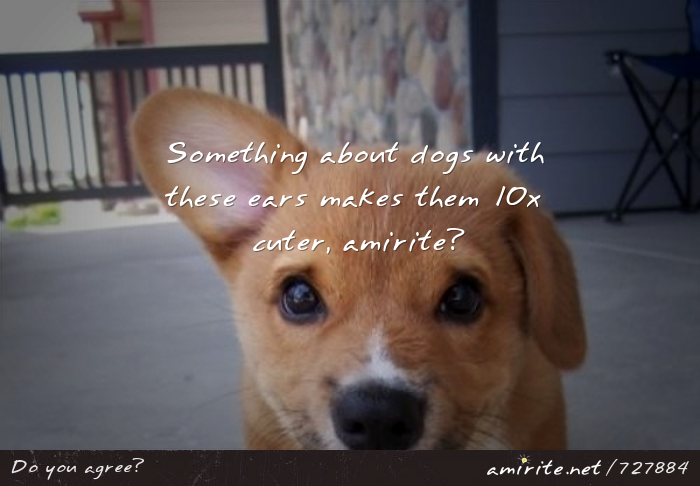 Something about dogs with crooked ears makes them 10x cuter, <strong>amirite?</strong>