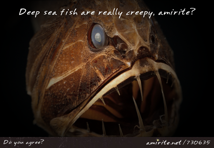 Deep sea fish and really creepy, <strong>amirite?</strong>
