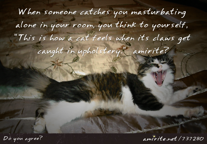When someone catches you **** alone in your room, you think to yourself, <em>This is how a cat feels when its claws get caught in upholstery.</em>  <strong>amirite?</strong>
