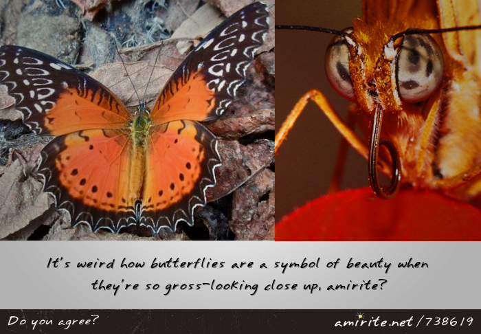 It's weird how butterflies are a symbol of beauty when they're so gross-looking close up, <strong>amirite?</strong>