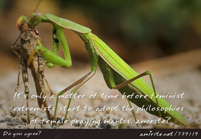 It's only a matter of time before feminist extremists start to adopt the philosophies of female praying mantis, <strong>amirite?</strong>