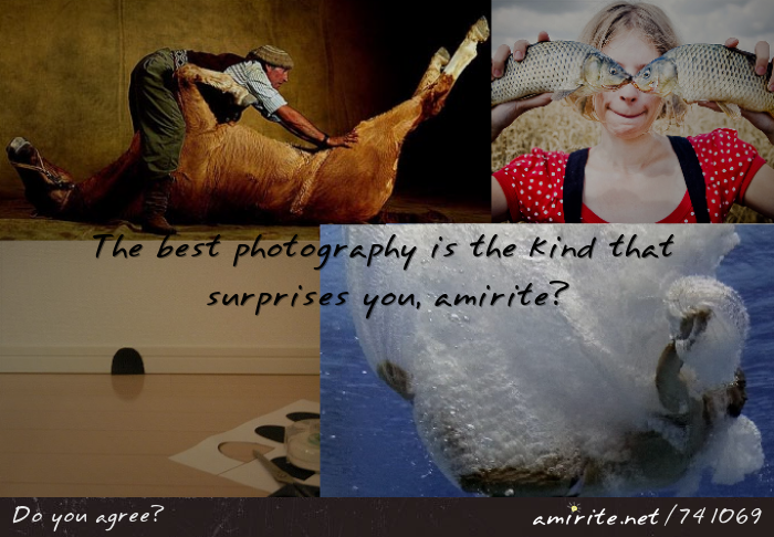The best photography is the kind that surprises you, <strong>amirite?</strong>