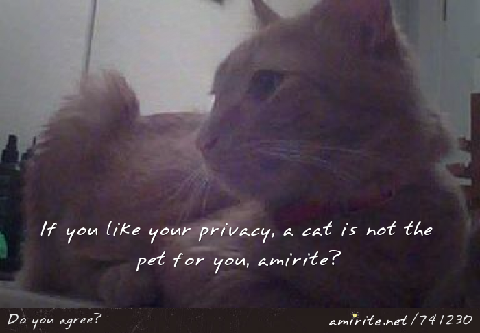 If you like your privacy, a cat is not the pet for you, <strong>amirite?</strong>