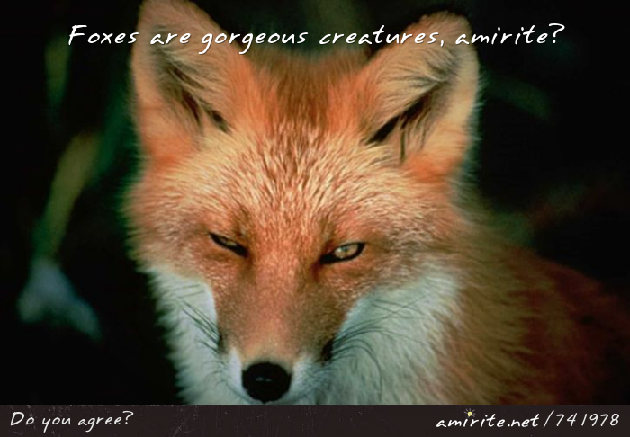Foxes are gorgeous creatures, <strong>amirite?</strong>