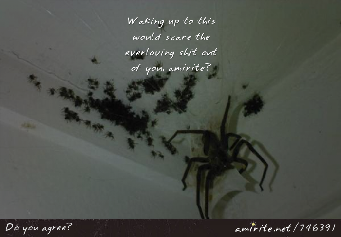 Waking up to a massive spider with it's unholy demon spawn would scare the everloving shit out of you, <strong>amirite?</strong>