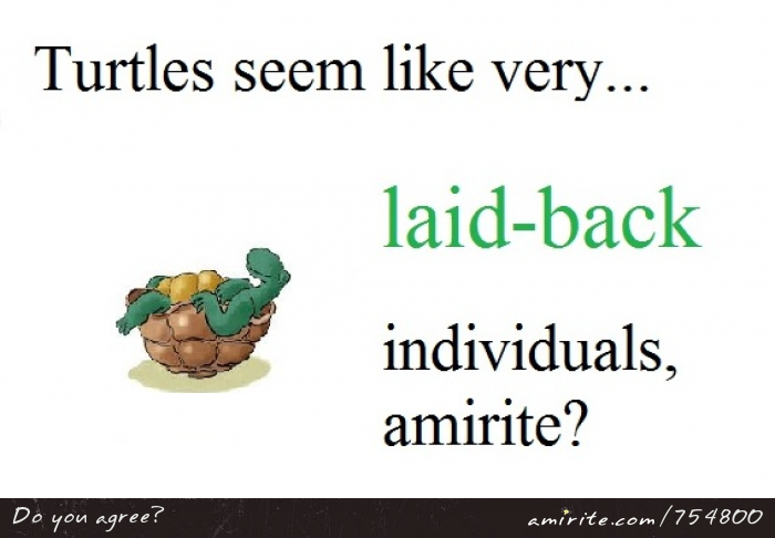 Turtles seem like very <em>laid-back</em> individuals, <strong>amirite?</strong>