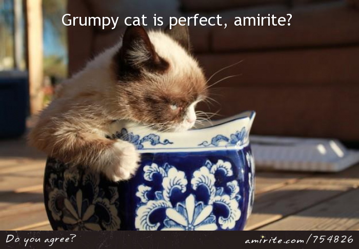 Grumpy cat is perfect, <strong>amirite?</strong>