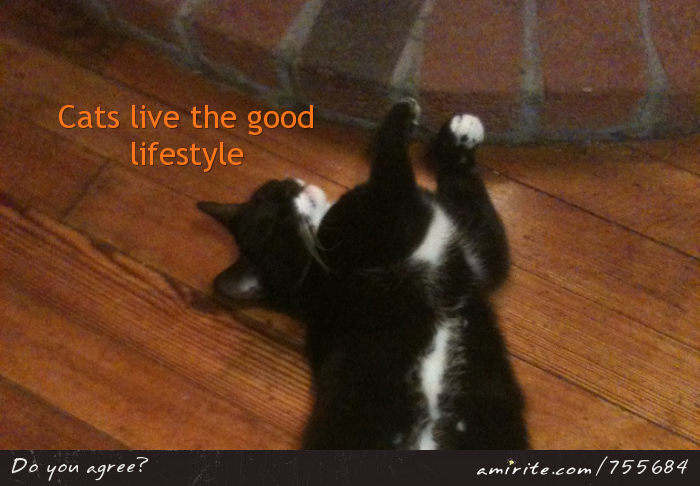 Cats live the good lifestyle