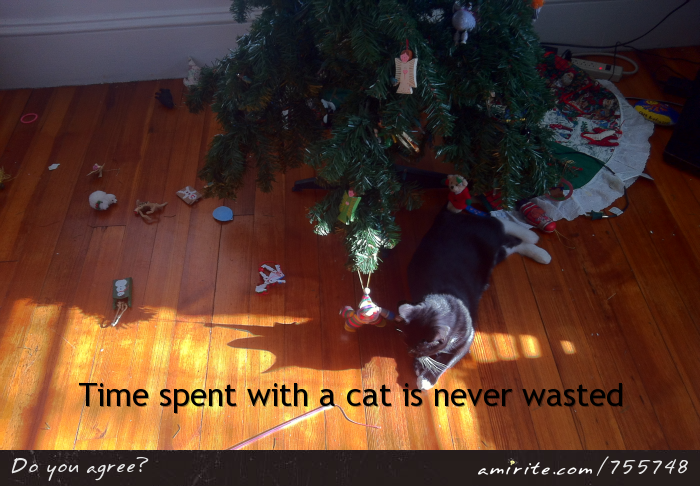 Time spent with a cat is never wasted
