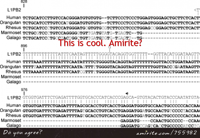 The similarity between ape DNA is cool. <strong>Amirite?</strong>