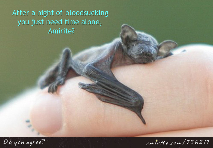 Baby bats look cute when they sleep after a hard night of vamping.