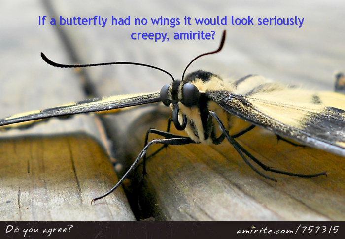 If a butterfly had no wings it would look seriously creepy, <strong>amirite?</strong>