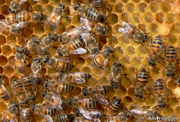Could Mowed Lawns & Agriculture be the end of the bees?