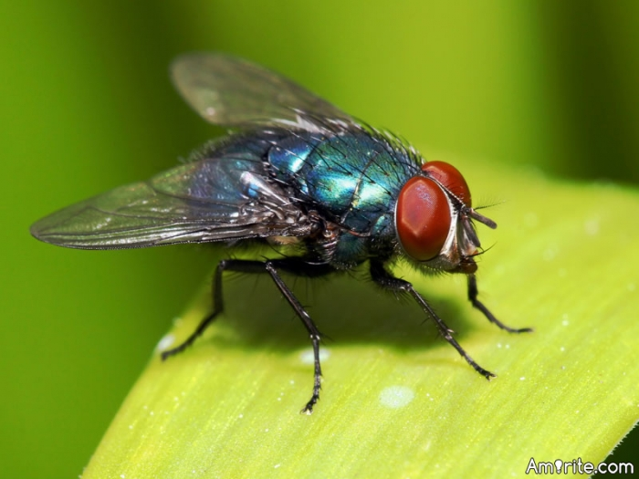 Would it benefit mankind if all flies went extinct?