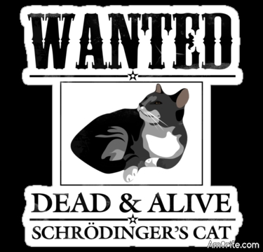 Schrodinger's cat is dead, <strong>amirite?</strong>