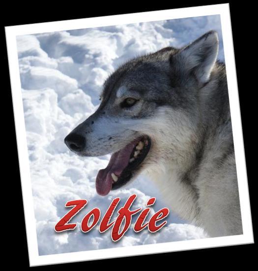 Zolfie's avatar.