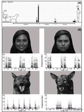 Do you believe dogs can recognize human emotions?