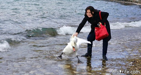 Tourist drags swan out of lake for a selfie, reportedly leaves it for dead