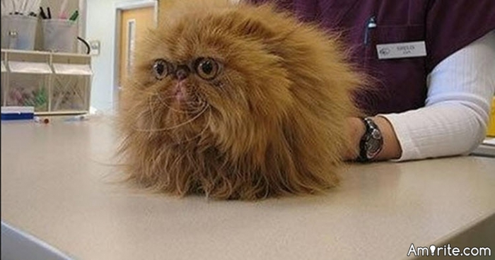 Have you ever been sicker than a cat with a 5 pound fur-ball?