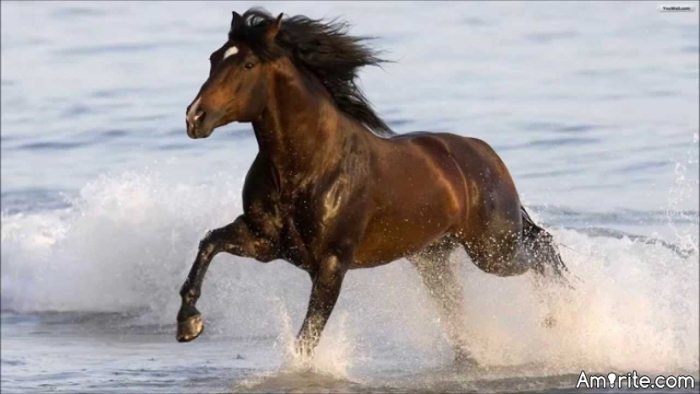 <b>You can't go wrong with a picture of horses.</b> <em>Please attach a pic of horse(s) if possible....</em>