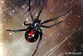 Were you ever bitten by a black widow spider?