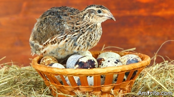 <b>Have you had quail's eggs?</b> <em>There a lots of eggs out there...if you enjoy the ordinary...does that mean you haven't tried anything else?</em>