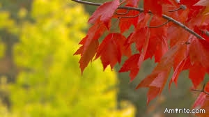 Oak leafs are the prettiest of leaves.