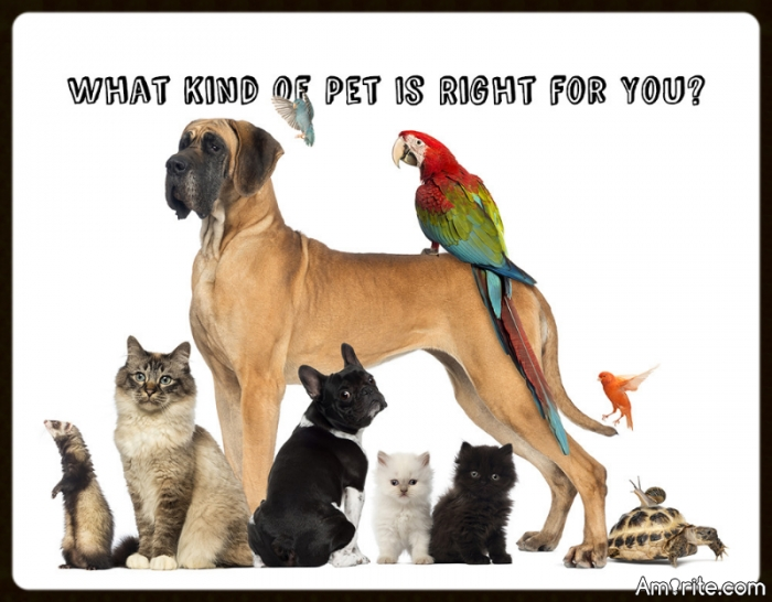 Quiz...What Kind of Pet is Right for You? Do you prefer the cuddly and cute or the creepy and crawly?