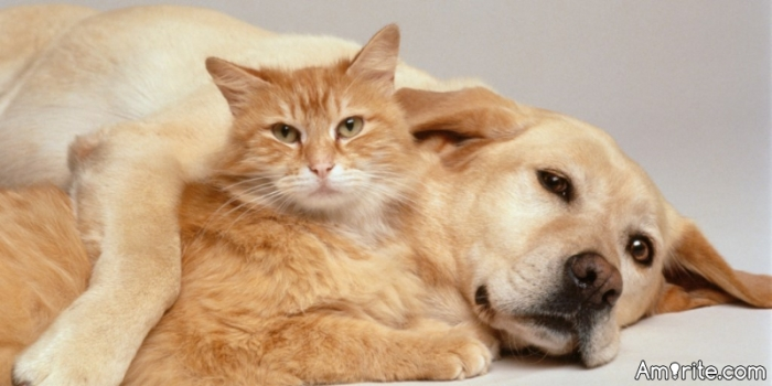 Which one would you be, Cat or Dog?