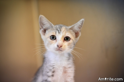 <b>Don't you wish cats could stay kittens?</b> <em>Unfortunately, cats these days can grow up to be pretty big lugs...when they are kittens they are still so lithe and tiny...</em>