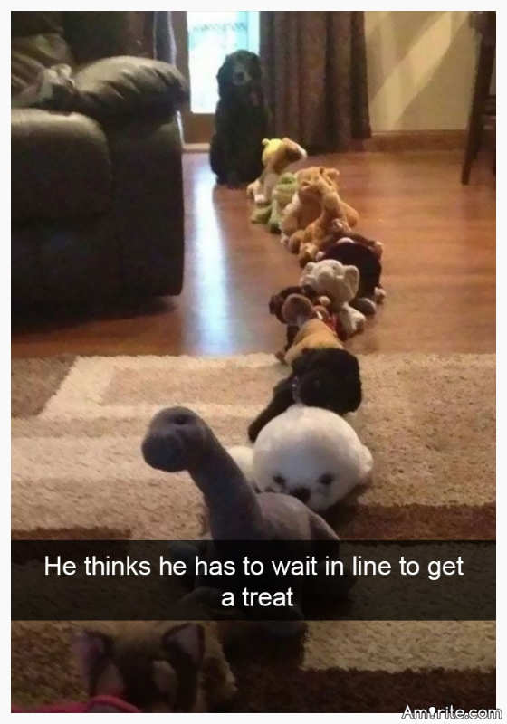 18 Dog Snapchats That Are Going To Make Your Day. It's not just the unconditional love that makes dogs man's best friend, they're also great at making us laugh even though they don't necessarily mean to.