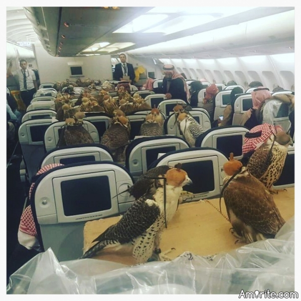 A Saudi Prince Just Paid For His 80 Falcons To Fly On A Commercial Flight.