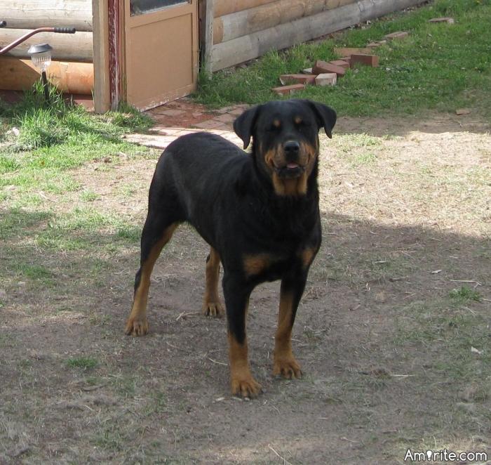 Genus species dog