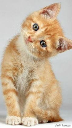 <b>Does your pet like being talked to...?</b> <em>Especially some cats <u>love</u> it when you chit chat with them...:)</em>