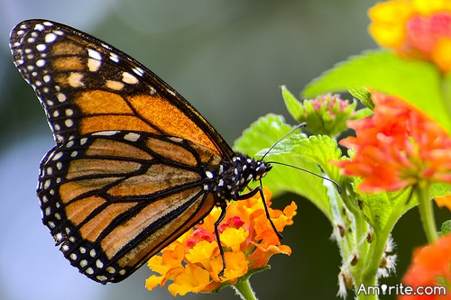<b>Butterflies are very pretty. If cockroaches read their monthly <em>Vogue</em> magazine, they'd grow wings and put on make up.</b> <em>Amirite?</em>