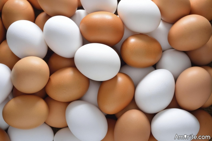 How many eggs have you laid today?
