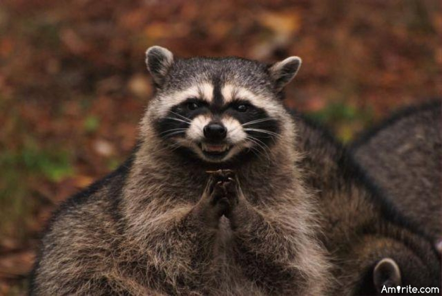 🐺 Have you ever adopted a wild animal? I have a racoon that seems to want to make my house his home. 🐺