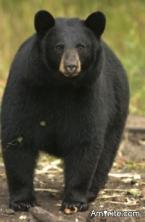 You afraid of Bears?