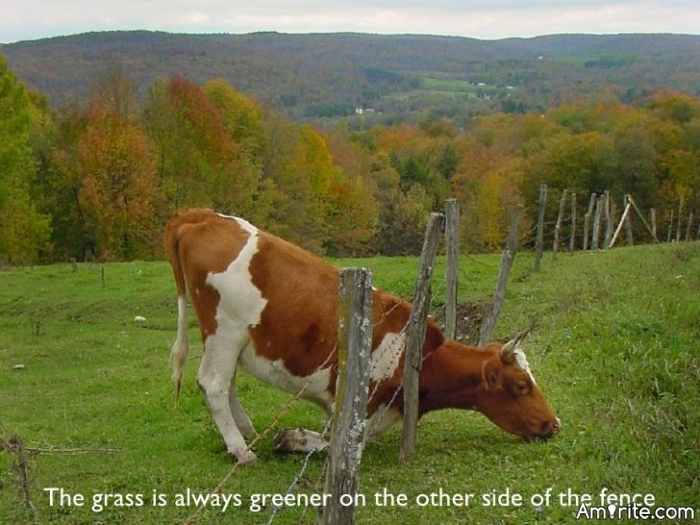 🌿 You really know the grass isn't always greener on the other side, but you have to go and have a look anyway. <em>amirite?</em>  🌿