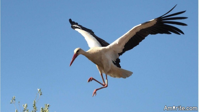 Hunting down the storks has to be quite effective as an alternative to eating birth control pills, <strong>right?</strong>