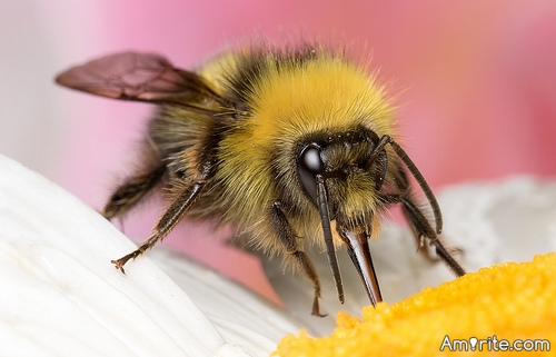 <b>If a bumble bee can fly...so can a pig.</b> <em>Dynamics be damned....</em>