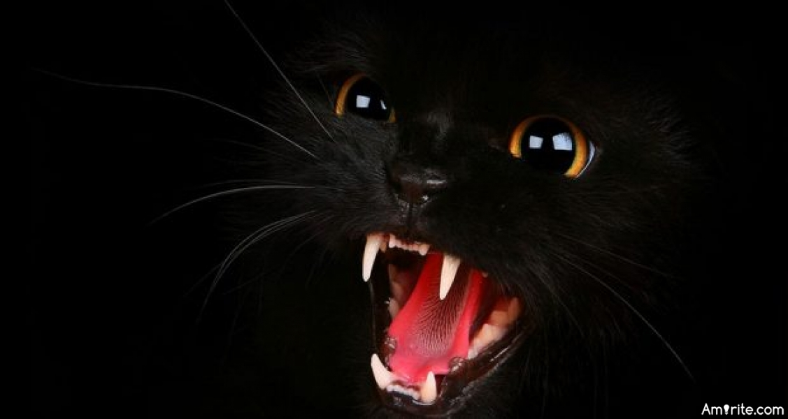Black Cats can be Scary, <strong>amirite?</strong>