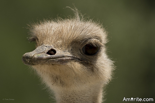 <b>Animals are adorable.</b> <em>Please give a name or a pic of an animal you think is cute.</em>